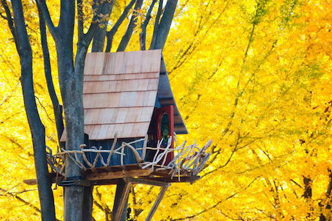 Tree-House-Surrounded-by-Yellow