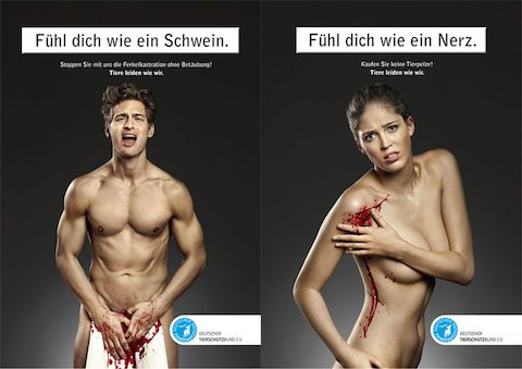deutscher-tierschutz-bund-ev-shows-that-animals-suffer-like-people-do-pig-and-mink-germany-2010
