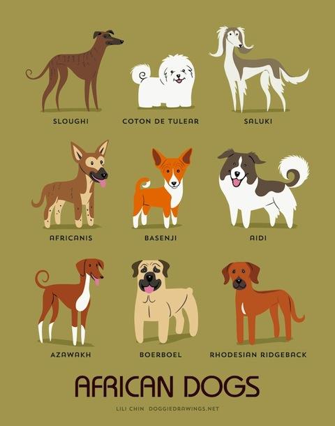 doggiedrawings11