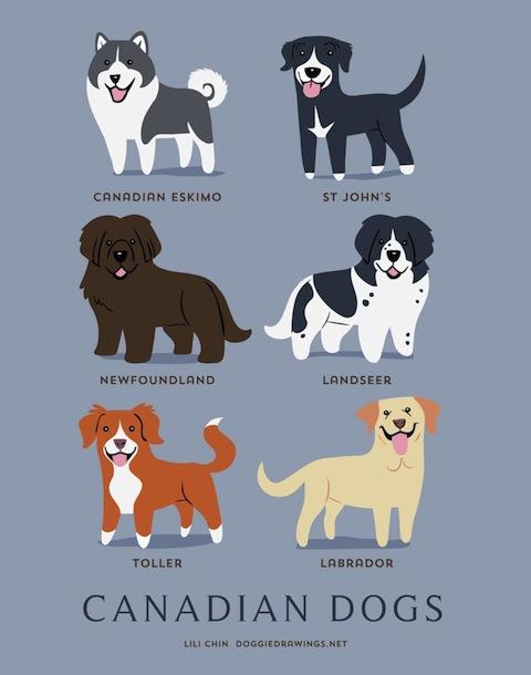 doggiedrawings2