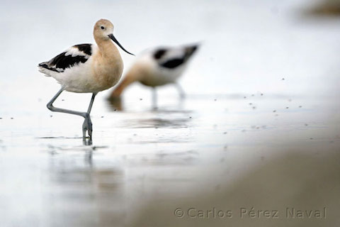 wildlife-photography-carlos-perez-naval-2