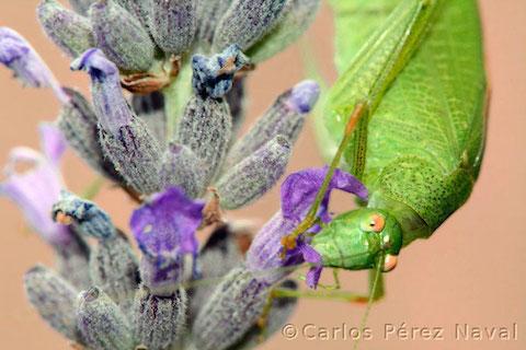 wildlife-photography-carlos-perez-naval-5