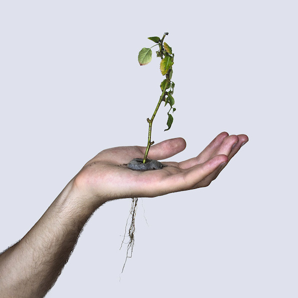 david-cata-grows-a-plant-in-the-palm-of-his-hand-designboom-03