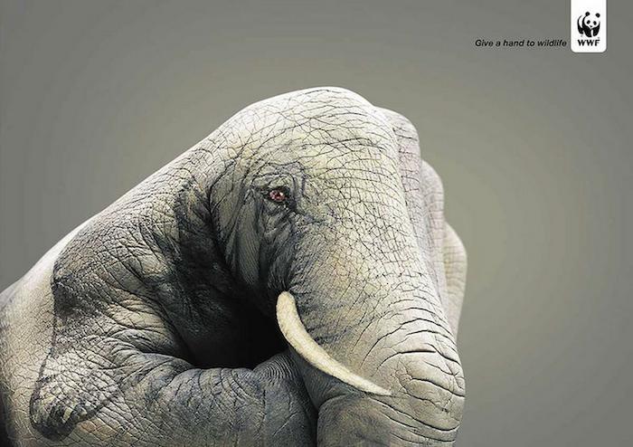 CAMPAÑA SOCIAL Give a hand to wildlife