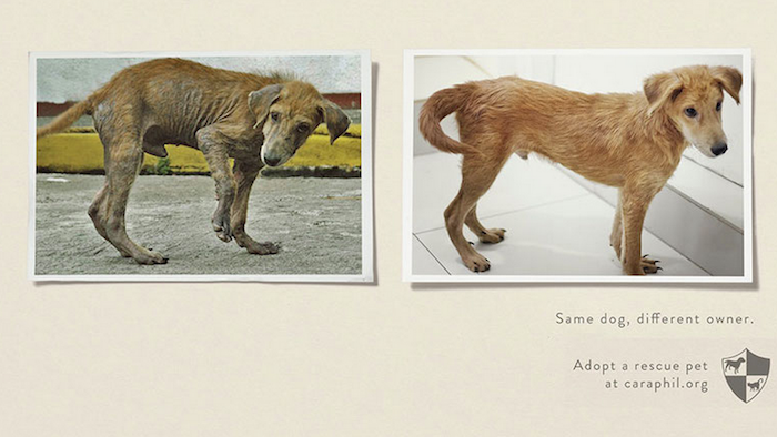 CAMPAÑA SOCIAL Same dog, different owner
