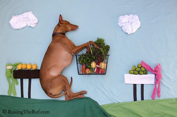 Un perro, sabanas y animales de peluche protagonizan divertida serie de fotografías