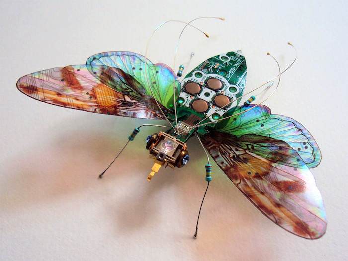Winged Insects 01
