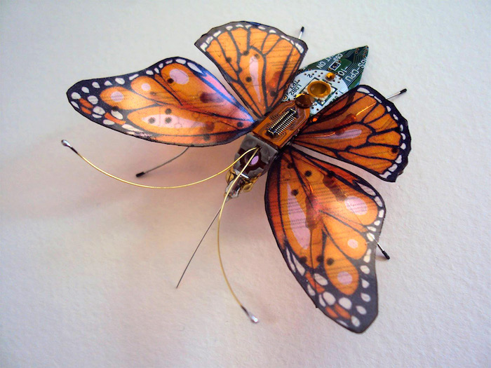 Winged Insects 03