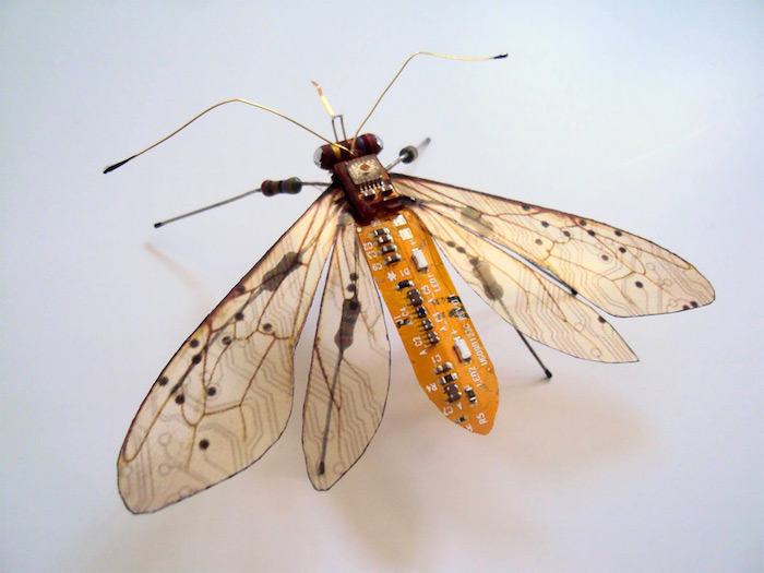 Winged Insects 05
