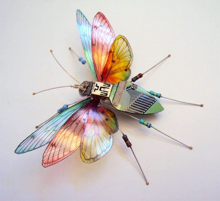 Winged Insects 06