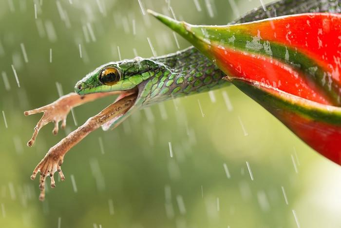 FOTO  Categoría- Mundo natural : Autor- Nicolas Reusens : Lugar- Costa Rica smithsonian.com Conoce a los 60 finalistas