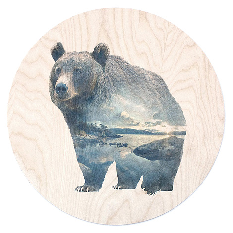 faunascapes-plywood-bear