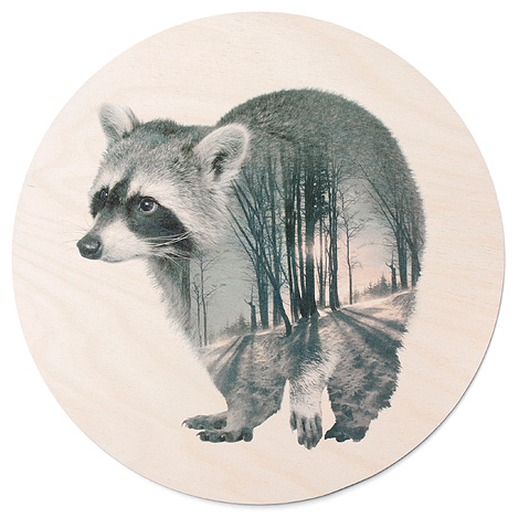 faunascapes-plywood-raccoon