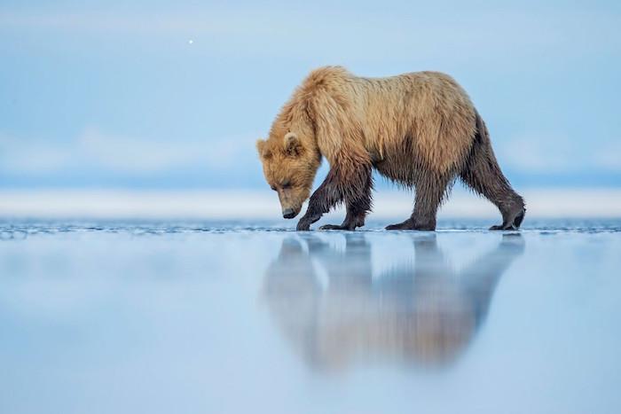 foto Categoría- mundo natural : Autor- Kevin Morgan : Lugar- Parque Nacional Lago Clark, Alaska smithsonian.com