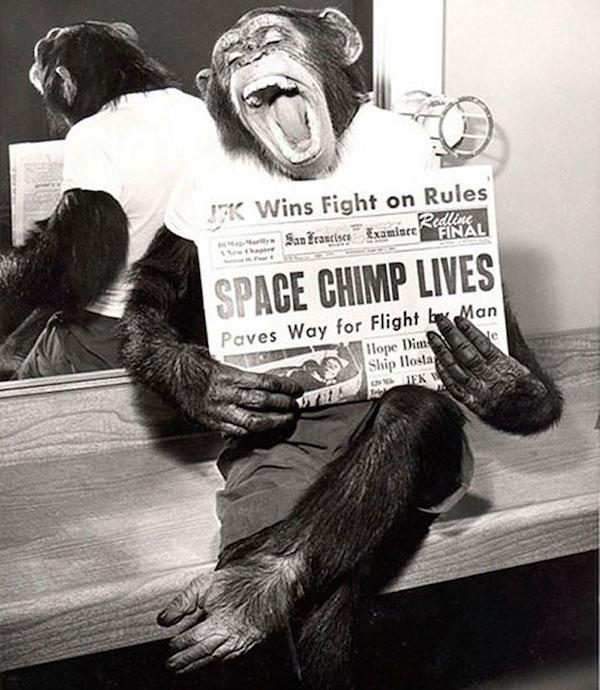 Chimpancé astronauta despues de una exitosa misión en el espacio en 1961