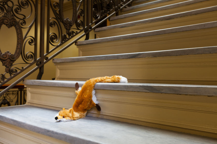 Morbidity & Mortality: Fox