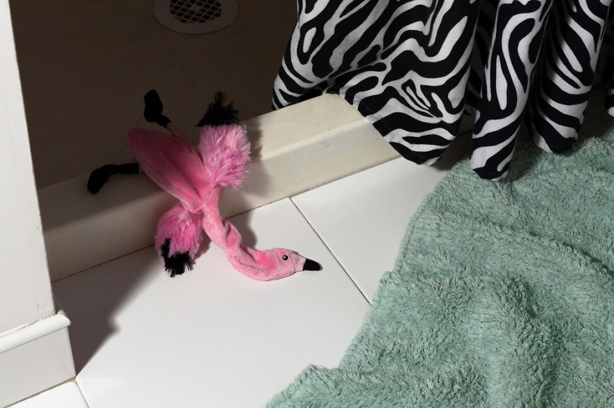 Morbidity & Mortality: Flamingo, 2012
