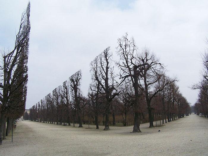 FOTO Árboles en el Parque Schonbrunn