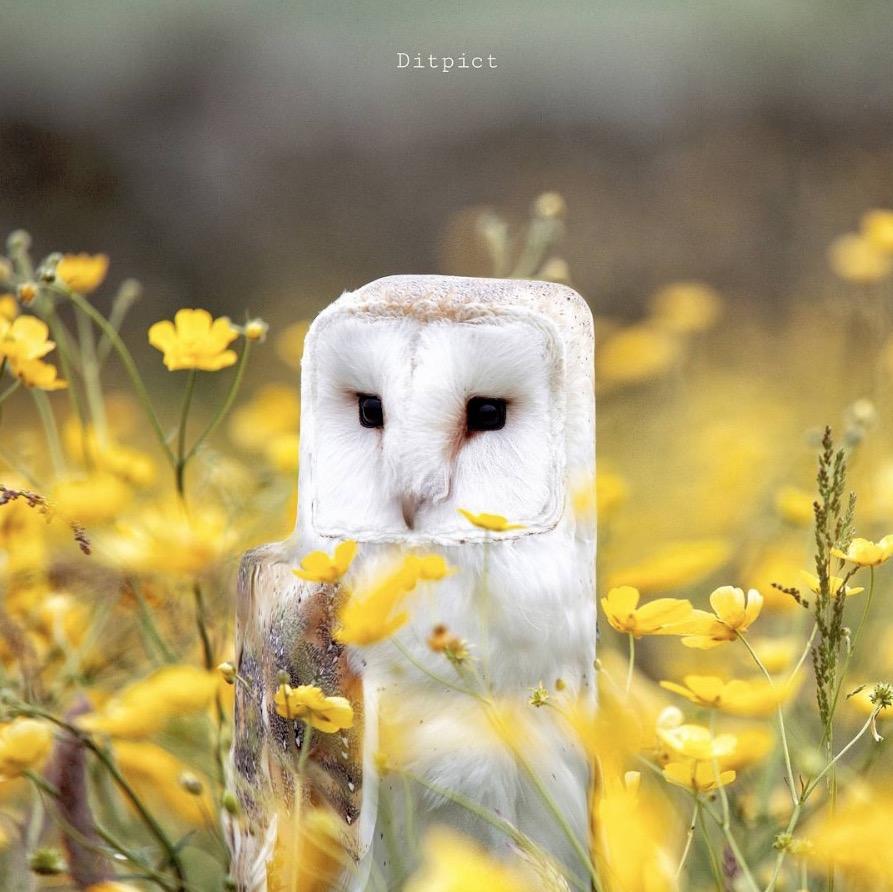 animal-cube-project-08