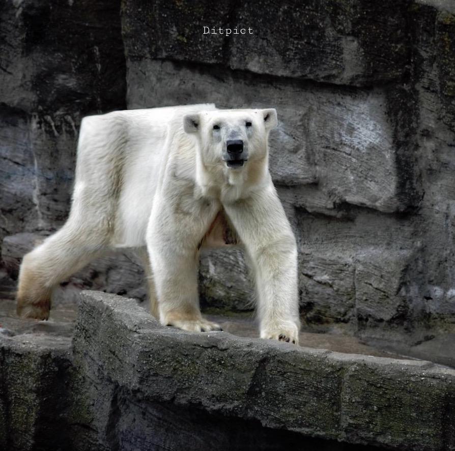 animal-cube-project-11