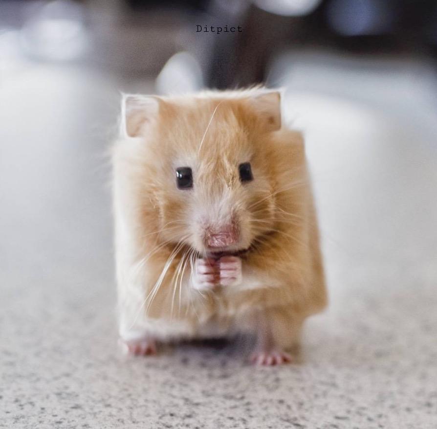 animal-cube-project-15