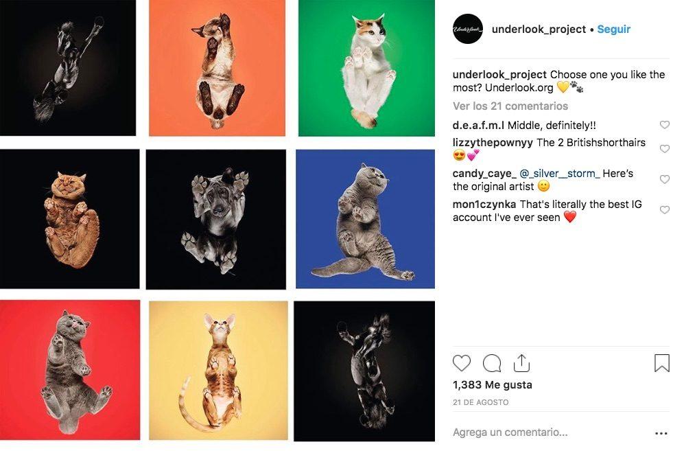 El fotógrafo lituano Andrius Burba decidió capturar un retrato de las mascotas desde otra perspectiva, por ello creó Underlook que los toma desde abajo.