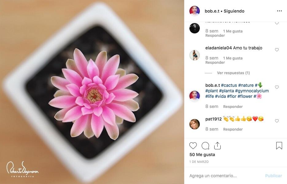 Estos sencillos consejos para fotografiar flores te dará la mejor toma de estos elementos naturales, aprovechando al máximo sus colores y brillo.