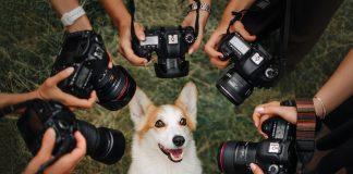 Fotografiar perros, gatos y mascotas puede ser algo complicado, pero si deseas que todo salga a la perfección, nosotros te contamos cómo hacerlo.