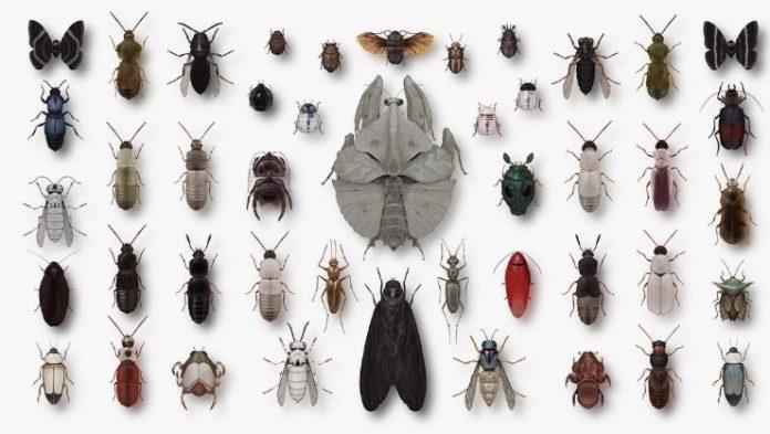 ¿Imaginas a insectos y personajes famosos en una sola ilustración? Richard Wilkinson creó la serie Arthropoda Iconicus, en la que combina ambos elementos.