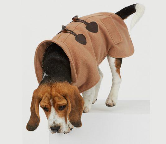 La línea de H&M para perros no sólo mantendrá calientito a tu mejor amigo, sino que te permitirá combinarte con él y crear un dúo increíble.