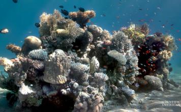 """Los paisajes de las fotografías submarinas suelen estar """"tapados"""" por el agua; ahora existe una tecnología que puede eliminarla y mostrar el verdadero color"""