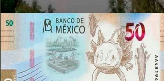 nuevo billete 50 pesos ajolote