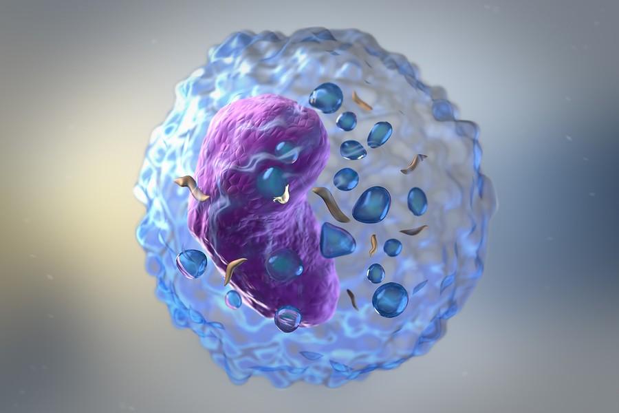 Celulas-T-Convencionales-Reguladoras-Enfermedades-Autoinmunes