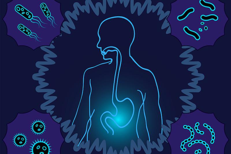 Microbiota-Lupus