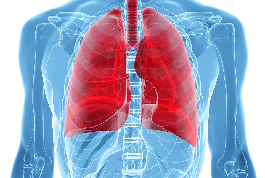 Biorreactor-Cultivo-Pulmones-Completos
