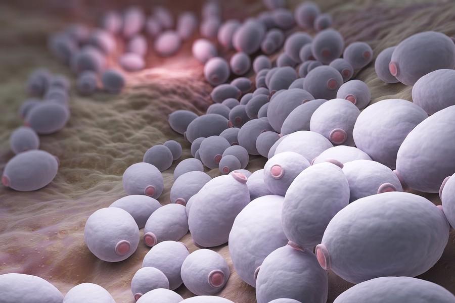 Candida-Albicans-Infecciones-Hongos-Levaduras