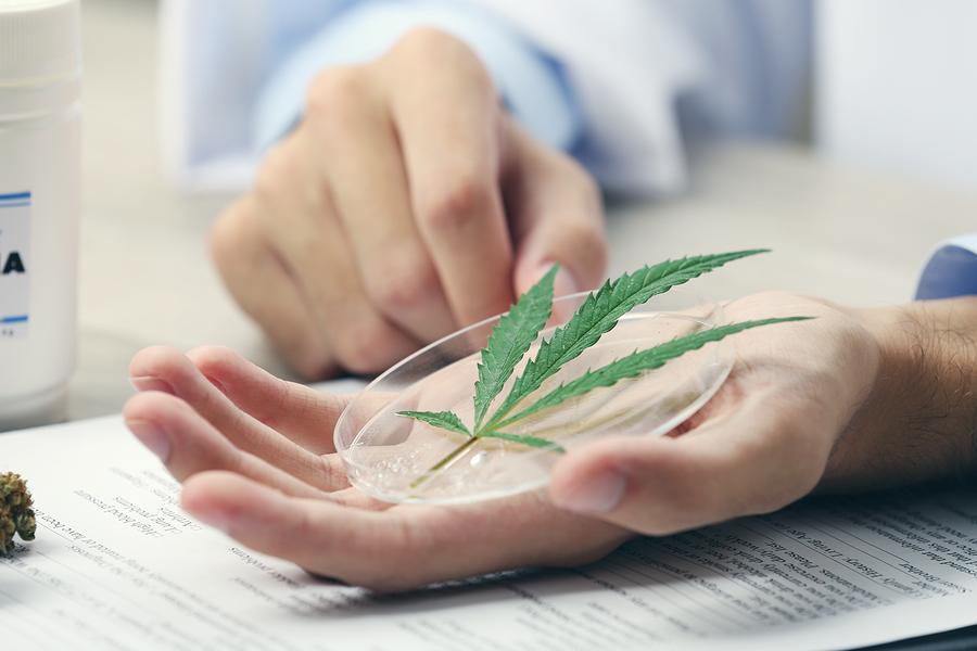 Uso-Medicinal-Marihuana-Laboratorios