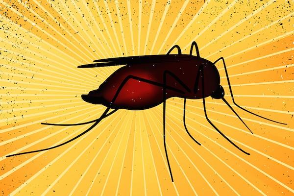 Fiebre-Amarilla-Mosquitos-Epidemia