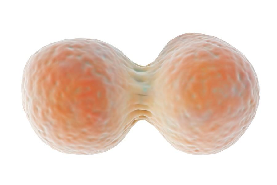 Reproduccion-Celular-Celulas-Madre