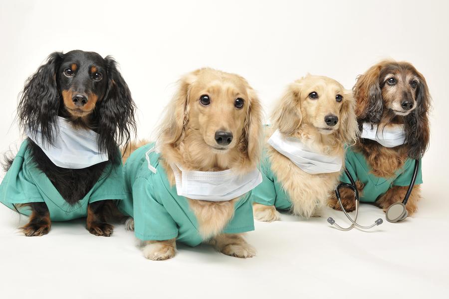 Perros-Apoyo-Pacientes-Hospitales