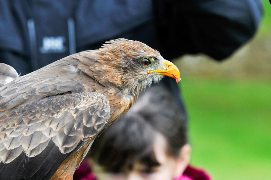 Zooterapia-Cetreria-Aves-Rapaces-Discapacidades