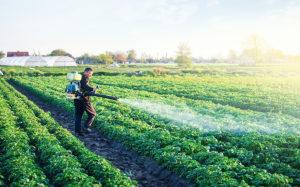 ¿Qué efectos tienen los pesticidas en la salud humana?