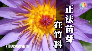 0716-正法苗芽-繁-450px