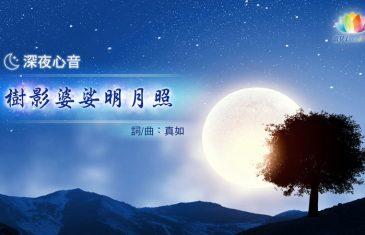 樹影婆娑明月照