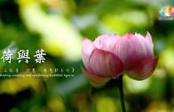 《 正能量、紓壓、療癒心系列-荷與葉 》calming, soothing and comforting Buddhist hymns