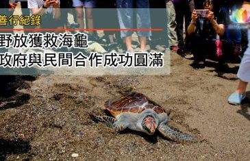 善行紀錄-野放獲救綠蠵龜・政府與民間組織合作成功圓滿