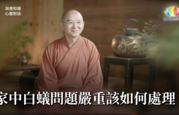 福智僧團・如得法師 – 家中白蟻問題嚴重該如何處理?《 與善知識心靈對話 》