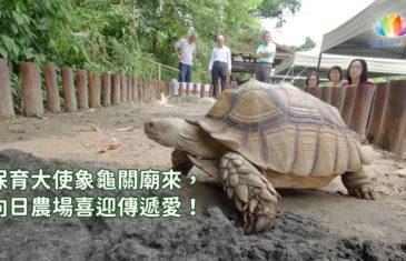 保育大使象龜關廟來,向日農場喜迎傳遞愛!-澈見訊息快遞