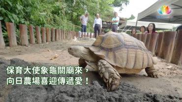 0820-向日象龜-繁
