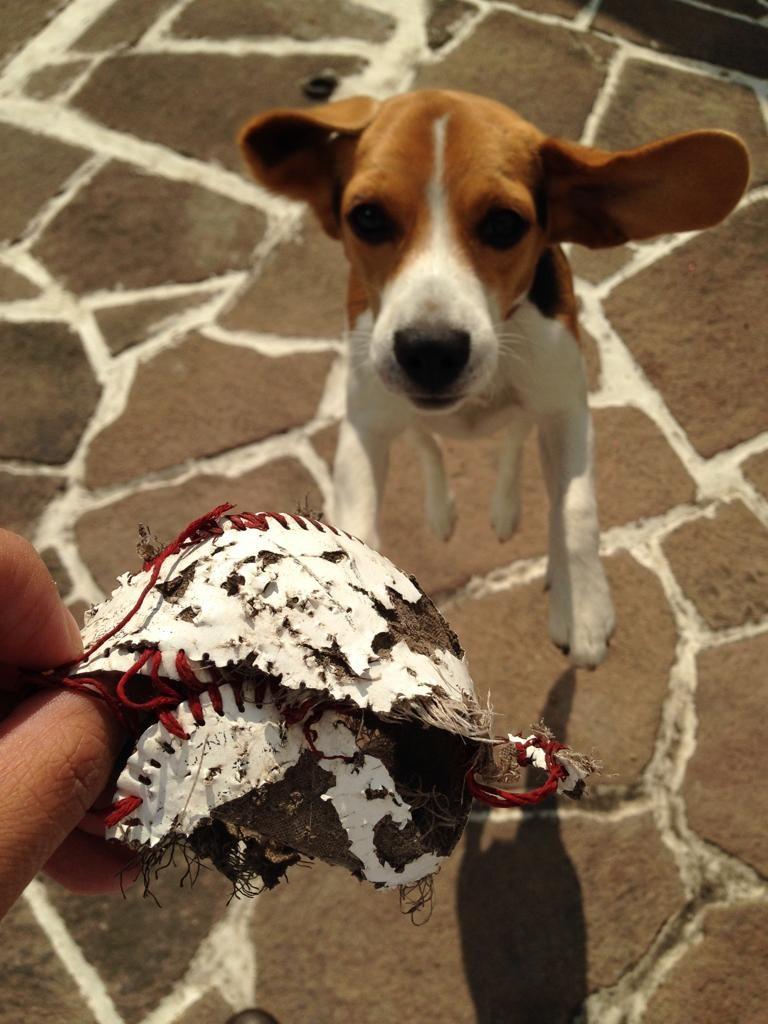 Lola, la esconde juguetes